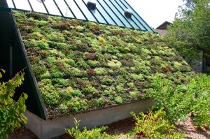 Green Roof by Ryan Somma