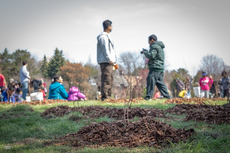 Plant a new tree in Toronto 1