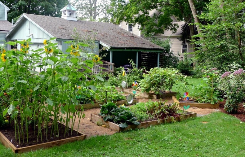 Backyard Garden by Lori L Stalteri