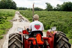 Andrews-Scenic-Acres-Farm-Strawberry-Tractor