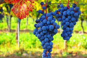 Grapes-by-Roberto-verzo