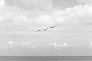 sea-black-and-white-flight-sky
